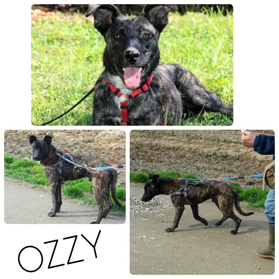 ozzy_2