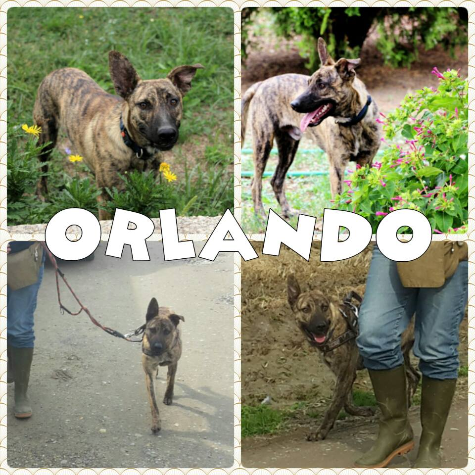 orlando_2