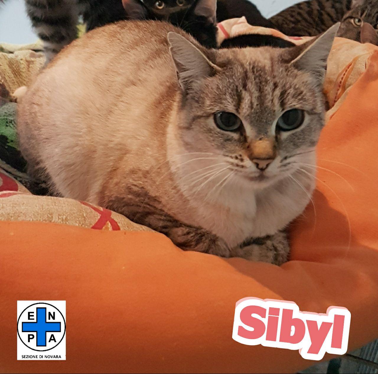 Sybil_17