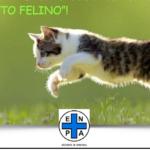 SCATTO FELINO – Concorso Fotografico – E' ora di votare