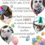 Domenica 17 Febbraio Festa del Gatto