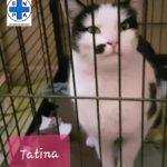 Tatina