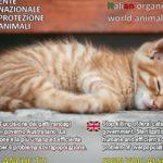 L' Australia vuole sterminare 2 milioni di gatti entro il 2020: diciamo NO!